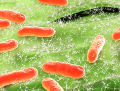 E-Coli-Bacteria-From-A-Sewer-Backup-Clinton-Twp.-MI